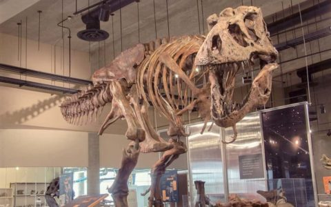 Largest Tyrannosaurus Rex In The World, Found In Saskatchewan, Canada