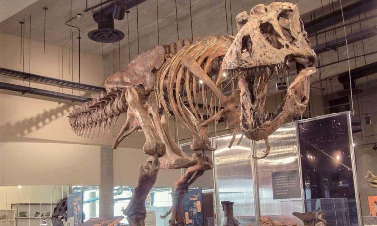 Largest Tyrannosaurus Rex In The World, Found In Saskatchewan, Canada